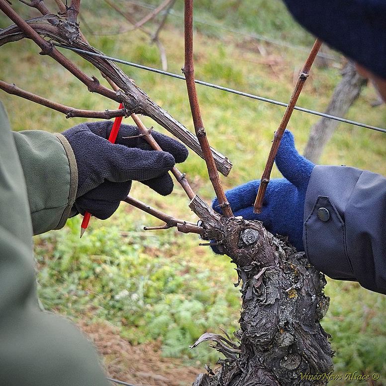39ème Concours Régional de Taille de Vigne