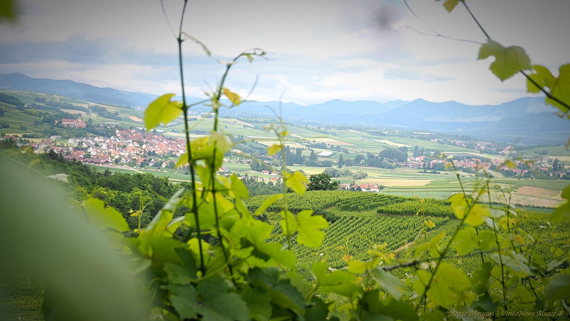 Millésimes Alsace, Duo nordique