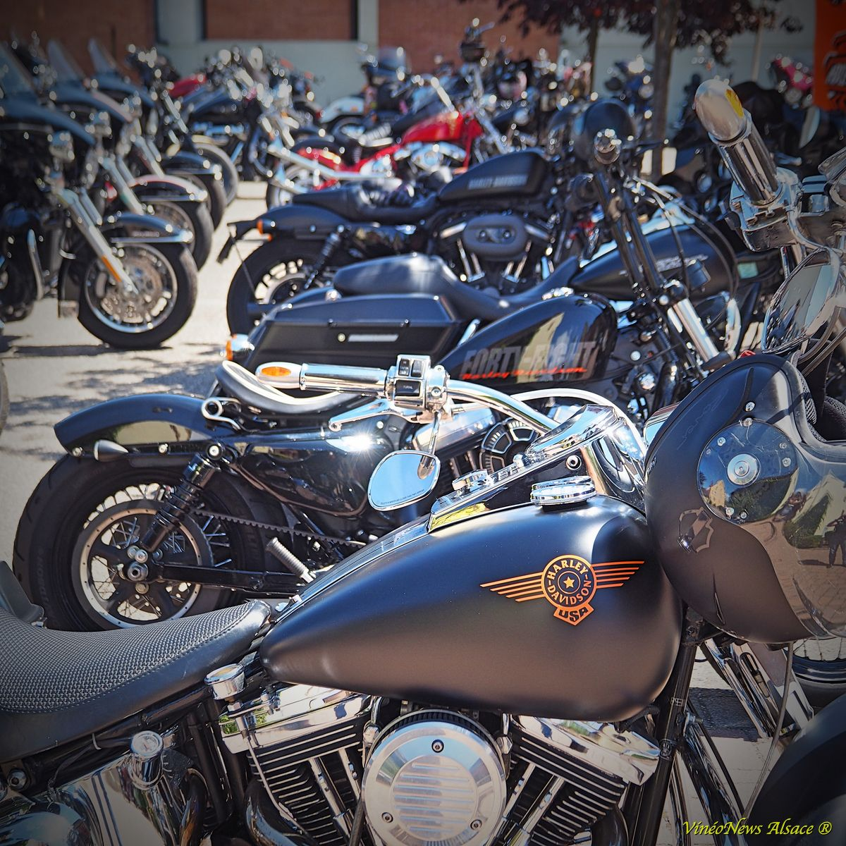 Foire Aux Vins, Steve Neff, Harley-Davidson