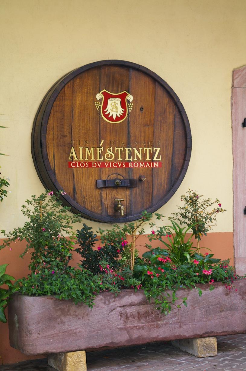 Visite au Domaine Aimé Stentz à Wettolsheim