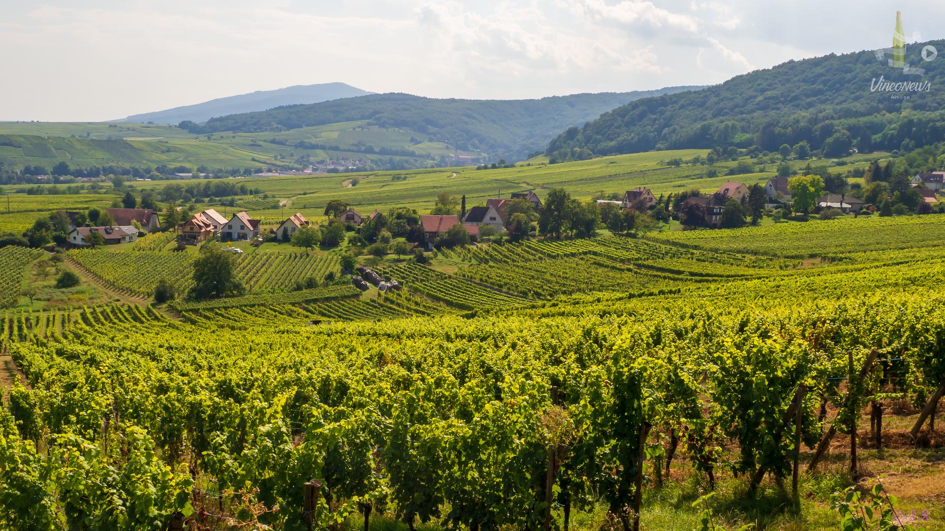 Météo radieuse pour les vins Bio d'Alsace