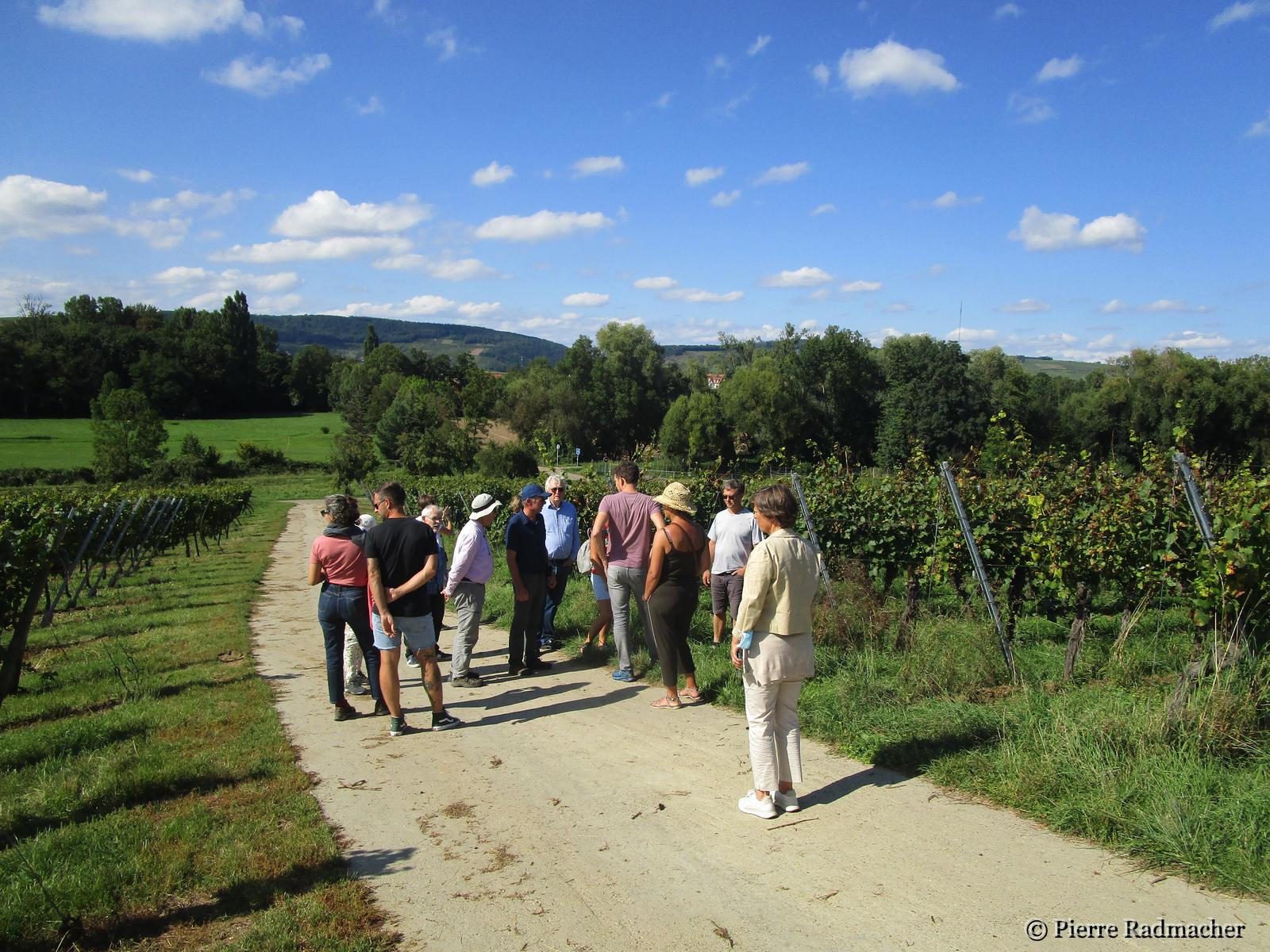 Promenade dans les vignes avec Jean-Marie Bechtold